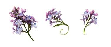 Upps?ttning av lilablommor och sidor royaltyfri foto