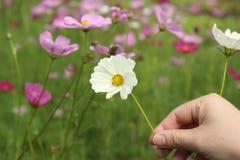 Uppskatta skönheten av naturen, utan att måste att registrera Arkivbild