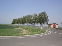 Uppställda träd längs vägen Royaltyfri Bild