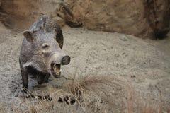 Uppstoppningdjurliv Fotografering för Bildbyråer