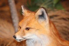 Uppstoppningdjurliv Royaltyfria Foton