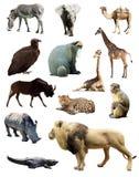 Uppsättning av afrikanska djur Arkivbilder