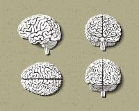 Uppsättning av den mänskliga hjärnan Fotografering för Bildbyråer