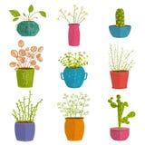 Uppsättning av gröna inomhus växter i krukor Royaltyfria Foton