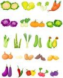 Uppsättning av grönsaker Arkivbild