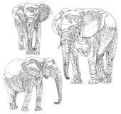 Uppsättning av hand drog elefanter Arkivfoto