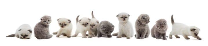 Uppsättning av kattungar Arkivfoto