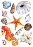 Uppsättning för gatubarn för ammonit för korall för snäckskal för seahorse för vattenfärghavshav Arkivfoton