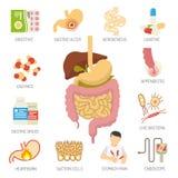 Uppsättning för symboler för digestivkexsystem Arkivfoton