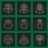 Uppsättningen av enkla plana symboler blommar, träd och frukter Moderiktig färgrik design Royaltyfria Bilder