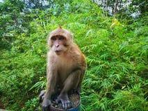 Upptäckt av Thailand, Tiger Cave, Krabi arkivbild
