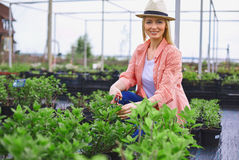 upptagen trädgårdsmästare Royaltyfria Bilder
