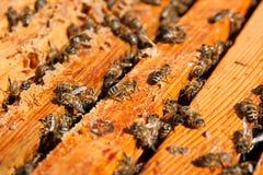 Upptagna bin, övre sikt för slut av de funktionsdugliga bina på honungskakan Arkivbilder