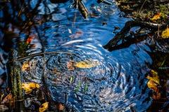Upptagna vattenfel Fotografering för Bildbyråer
