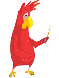 Uppvisning av den roliga papegojan. Royaltyfri Fotografi