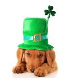 Uppy irländsk treklöver Royaltyfria Foton
