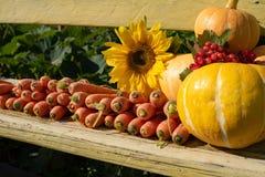 Uprawa świezi warzywa kłama na ławce na otwartej przestrzeni zdjęcia royalty free