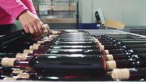 Uprawa pracownika ułożenia wina butelki w zbiorniku zbiory wideo