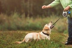 Uprawa strzał kobiety szkolenia pies Zdjęcie Royalty Free