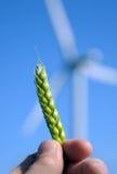 uprawa wiatr Fotografia Stock