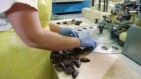 Uprawa wręcza kładzenie cukierki w opakunkową maszynę Cukierek fabryka zbiory wideo