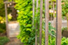 Uprawiać ogródek łat warzyw drewnianego poparcia zieloną strukturę Obraz Stock