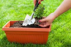Uprawiać ogródek Zdjęcie Stock