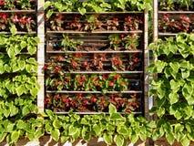 Uprawiać ogródek na ścianie zdjęcie stock