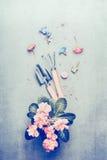Uprawiać ogródek narzędzi i menchii pal kwitnie w garnku Obraz Stock