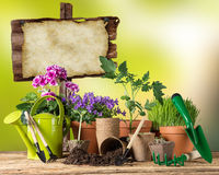 Uprawiać ogródek narzędzia i kwiaty na drewnianym tle Fotografia Royalty Free