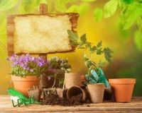 Uprawiać ogródek narzędzia i kwiaty na drewnianym tle Obraz Royalty Free
