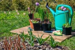 Uprawiać ogródek narzędzia i kwiaty na drewnianym tle Fotografia Stock