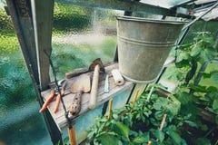 Uprawiać ogródek narzędzia w szklarni Obrazy Stock
