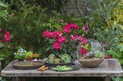 Uprawiać ogródek narzędzie Obraz Royalty Free