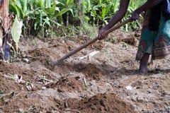 Uprawiać ziemię pola w Africa obrazy stock