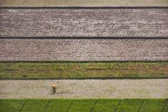 Uprawiać ziemię ryż Zdjęcie Stock