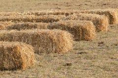 Uprawiać ziemię traw bele Zdjęcia Royalty Free
