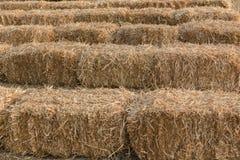 Uprawiać ziemię traw bele Fotografia Royalty Free