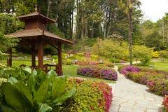 uprawia ogródek japończyka Zdjęcia Royalty Free