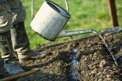uprawia ogródek jego kuchennego chłopa Zdjęcie Stock