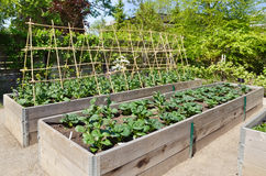 uprawia ogródek kuchnię Zdjęcia Royalty Free