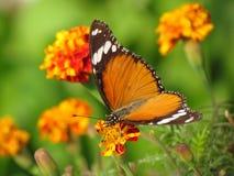 Uprawiać ogródek, kwiaty i motyl, Zdjęcie Royalty Free