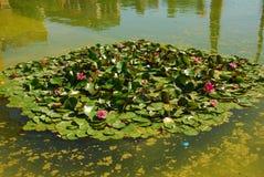 uprawia ogródek lelui Luisa Maria Seville wodę Fotografia Stock