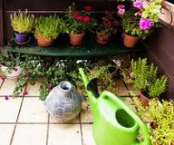 Uprawiać ogródek na balkonie Zdjęcia Royalty Free