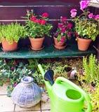 Uprawiać ogródek na balkonie Zdjęcie Royalty Free