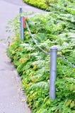 uprawia ogródek nie kroka Fotografia Stock