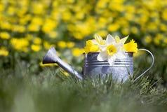 Uprawiać ogródek - podlewanie puszka z kwiatami Obraz Stock