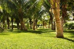 uprawia ogródek tropikalnego Fotografia Stock