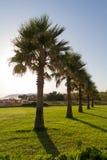 Uprawia ogródek z trawą, roślinami i drzewkami palmowymi. Fotografia Royalty Free