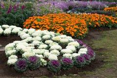 Uprawiać ogródek i Kształtować teren Obraz Stock